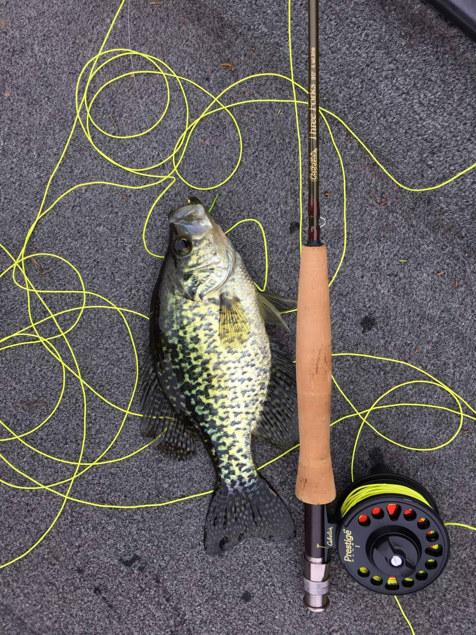 Crappie lying on ground next to best crappie fishing rod and reel