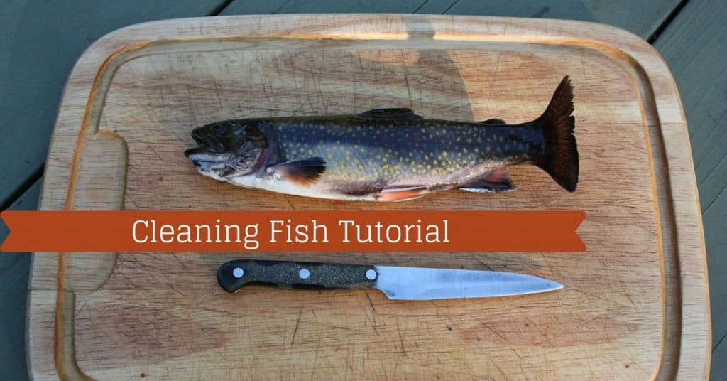 Cleaning Fish Tutorial - Fishstainable