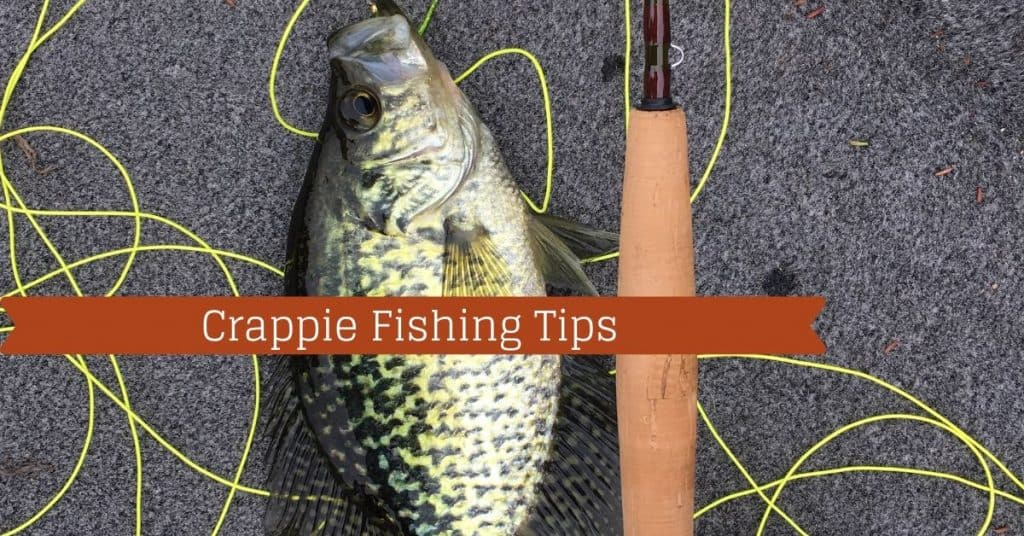 Crappie Fishing Tips - Fishstainable