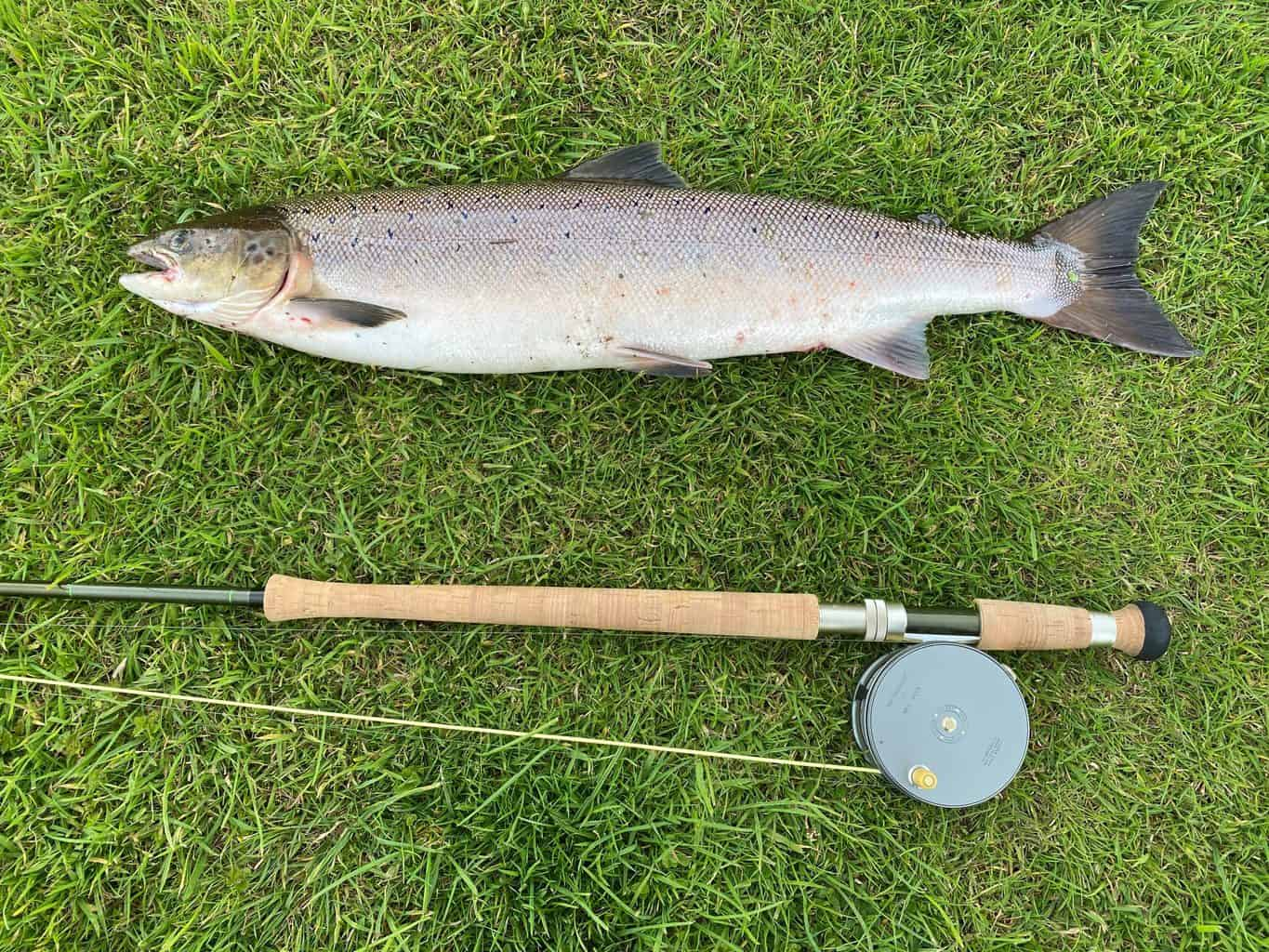 One of the best fiberglass fly rods lying next to a trout in the grass