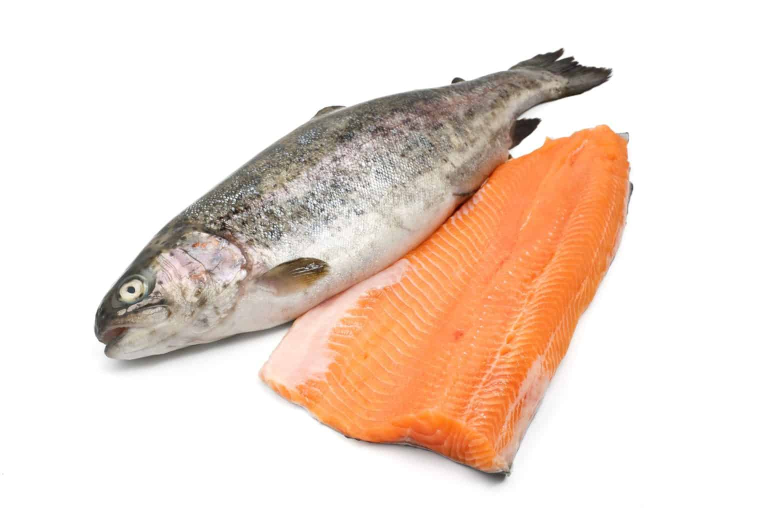 fresh trout and fillet over white background - salmon vs trout
