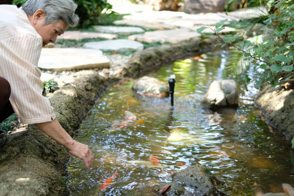 asian old asian elderly senior elder woman looking at koi fish in pond