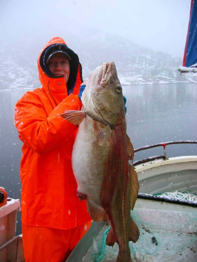 Huge Cod was held by a man standing on a fishing boat. But what are the differences between haddock vs cod