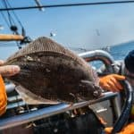 can you eat flounder? fisherman on a boat holding one
